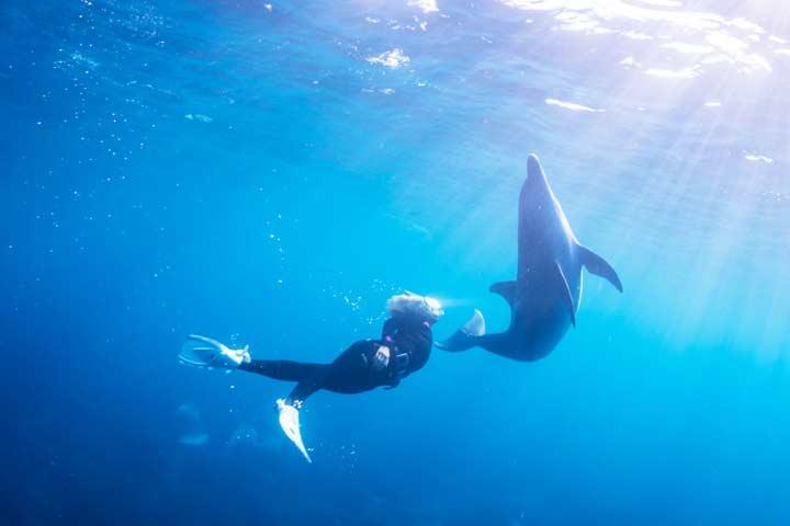 御蔵島でイルカと廣瀬花子のフリーダイビング